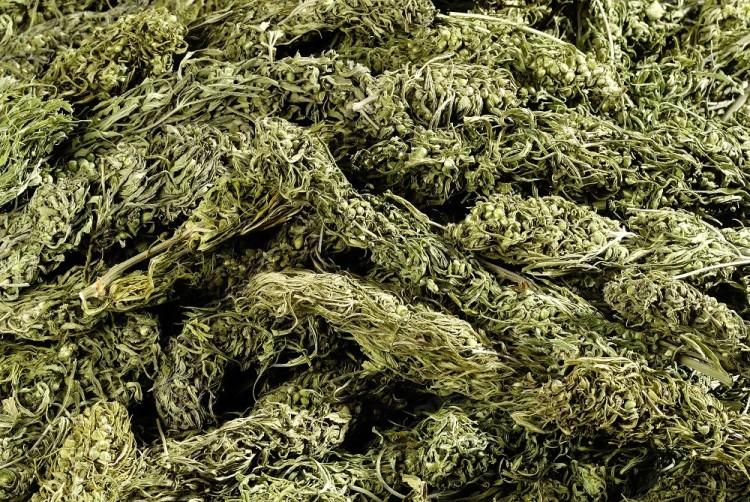 Organic Hemp CBD Flower Buds – 40 grams (3-4% CBD)