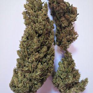 hemp indoor buds